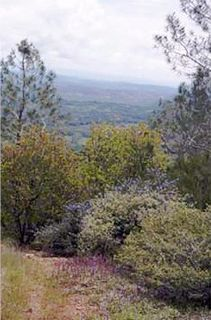 Pine Hill Ecological Reserve