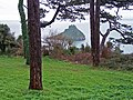 Pines in the park - geograph.org.uk - 1639906.jpg