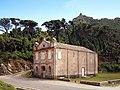 Pino col de Santa Lucia Tour de Sénèque.jpg