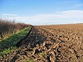 Ploughed Field - geograph.org.uk - 325212.jpg