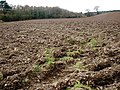 Ploughed field, at Stowford Farm - geograph.org.uk - 1192596.jpg