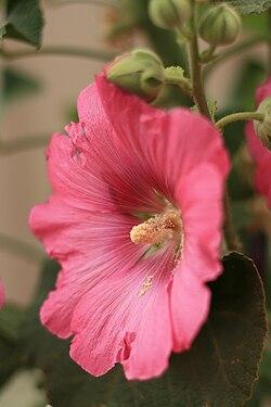 taksonomia celów bloom