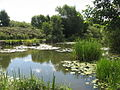 Pond at Clincton Wood Local Nature Reserve - geograph.org.uk - 930354.jpg