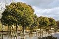 Ponteareas, Pontevedra, Spain - panoramio (5).jpg