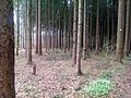 Poppendorf Wald.JPG