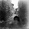Porcs en un carrer del poble de Queralbs.jpeg