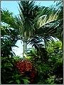 Port Vila - The Nature - panoramio.jpg