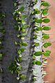 Pretoria Botanical Gardens-037.jpg
