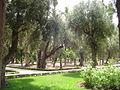 Public park in Marrakech (2845751702).jpg
