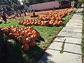 Pumpkin Unloading - panoramio.jpg