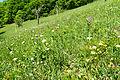 Purpur-Knabenkraut DSC01114.jpg