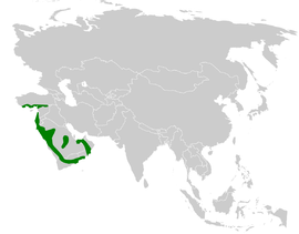 Pycnonotus xanthopygos distribution map.png