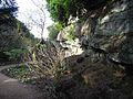 Quarry Garden at Belsay Hall - geograph.org.uk - 1172198.jpg