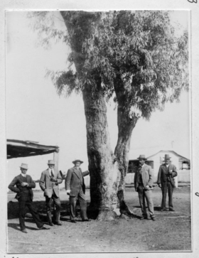 Queensland State Archives 2817 Leichhardts Tree at Dawson River Taroom c 1914.png