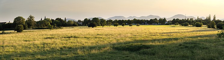 Meadow in Queichheim during sunset