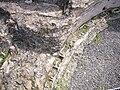 Quintili - calidarium condutture riscaldamento 1070768.JPG