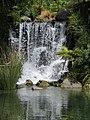 Rainbow Springs, Rotorua - panoramio (3).jpg