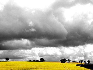 Aigre - Rape fields and sky