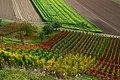 Reben und Felder - panoramio.jpg