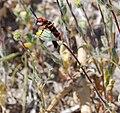 Red Beetle 1.jpg