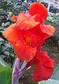 Redflower12.jpg