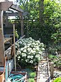 Redwood bench in Cottage Garden Berkeley 22.jpg
