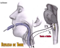 Reflexo da tosse.png