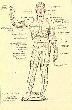 az emberi szervezet gyermekek diftillobothriasis tünetei és kezelése
