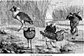 Reptiles and birds - a popular account of their various orders - with a description of the habits and economy of the most interesting (1870) (20556617229).jpg