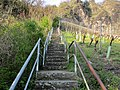 Rhöndorf Weinberge Treppenaufgang.jpg
