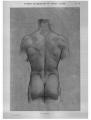 Richer - Anatomie artistique, 2 p. 87.png
