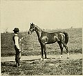 Riding and driving (1905) (14787318733).jpg