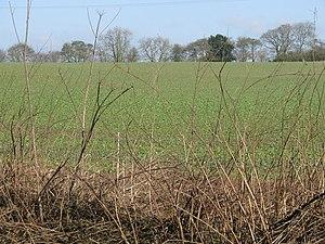 English: Roadside field east of Lilley