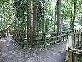 Robert Simpson Nature Trail 01.JPG