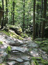 Rocks of Dovbush3-Ukraine-2011.JPG