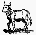 Roman ox, from a painting on a wall in Pompeii (Evolution of British Cattle).png
