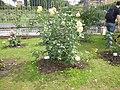 Roseto-di-roma-capitale---sito-di--il-cimitero-ebraico--dal-1645-fino-al-1934 9005796993 o 18.jpg