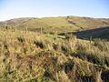 Rough grazing field - geograph.org.uk - 297742.jpg