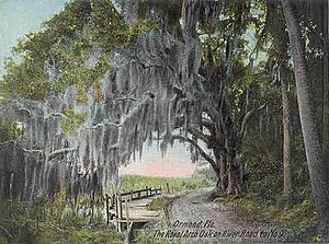 Ormond Beach, Florida - Image: Royal Arch Oak