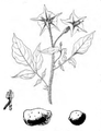 Roze fig.9 et 10.png