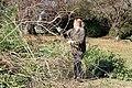 SB VSCC boxwood restoration at Mulberry Hill (16124985156).jpg