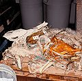 STS-51-L Recovered Debris (TDRS) - GPN-2004-00007.jpg
