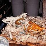 STS-51-L Recovered Debris (TDRS) - GPN-2004-00007