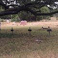 Salem Cemetery Crosses, Bangs Texas.jpg