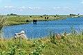Saltholm - panoramio (41).jpg