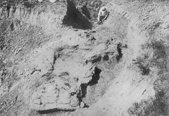 Saurolophus - Photo from the excavation of S. osborni in 1911