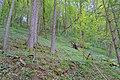 Schleitheim Auenwaldreservat Seldenhalde Bild 5.jpg