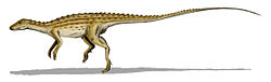 Scutellosaurus lawleri