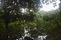 Seasonal Swamp Forest In National Botanical Garden of Bangladesh pic 3.jpg