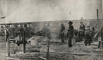 A. W. Piper - An Asahel Curtis photograph of Piper overseeing the Seattle barbecue to commemorate the completion of the transcontinental Northern Pacific Railroad September 14, 1883